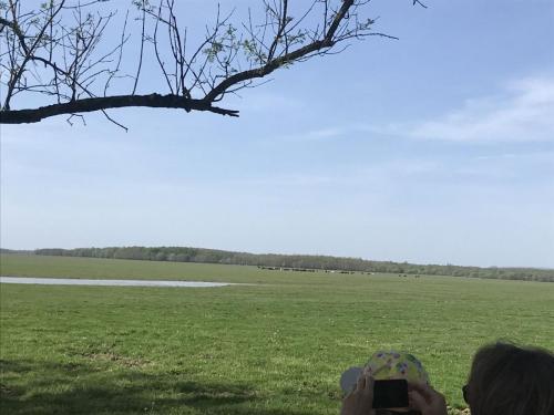 Lonjsko polje